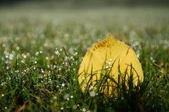 秋天叶子在用早晨露水盖的草甸 免版税图库摄影