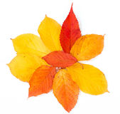 秋天叶子在空白背景的文本模板 免版税图库摄影