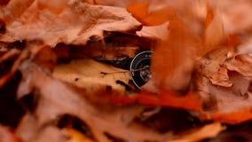 秋天叶子在老照相机落 股票视频