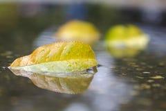 秋天叶子在水中 库存照片