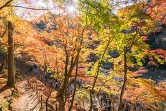 秋天叶子在Korankei,爱知,日本 图库摄影