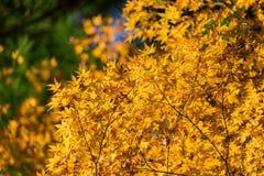 秋天叶子在Korankei,爱知,日本 库存照片