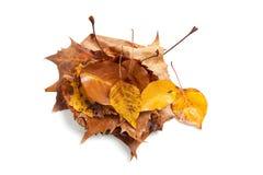 秋天叶子堆积白色 免版税库存照片