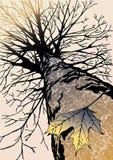 秋天叶子孤独的槭树 免版税库存图片