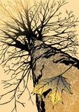 秋天叶子孤独的槭树 库存照片