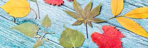 秋天叶子干燥标本集的背景  免版税图库摄影