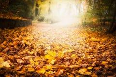 秋天叶子废弃物在庭院或公园,落与五颜六色的下落的叶子的室外自然背景 库存照片