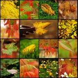 秋天叶子拼贴画 图库摄影