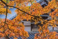 秋天叶子有屋顶房子背景在Korankei,爱知, Ja 库存照片