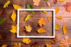 秋天叶子构成 库存照片