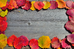 秋天叶子框架  库存照片