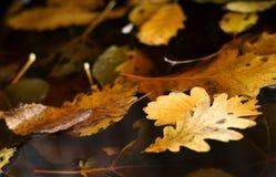 秋天叶子水面 免版税库存图片