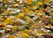 秋天叶子满地露水的地毯在绿草的 库存照片