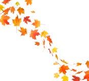 秋天叶子漩涡 库存图片