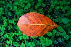 秋天叶子特写镜头在模糊的叶子背景中 图库摄影