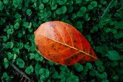 秋天叶子特写镜头在模糊的叶子背景中 库存照片
