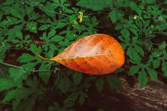 秋天叶子特写镜头在模糊的叶子背景中 库存图片
