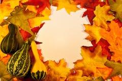 秋天叶子用金瓜 免版税库存图片