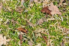 从秋天叶子的在地面的背景和草 库存图片