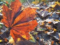 秋天叶子的纹理 免版税库存图片