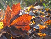 秋天叶子的纹理 免版税库存照片