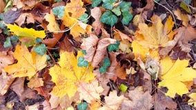 秋天叶子离开自然纹理桔子背景 免版税库存照片