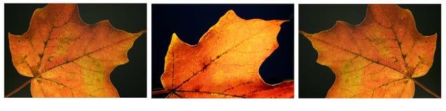 秋天叶子系列 库存照片
