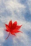 秋天叶子红色 免版税库存照片