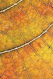 秋天叶子纹理 库存照片