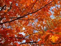 秋天叶子背景-储蓄照片 库存图片