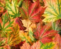 秋天叶子背景 库存图片