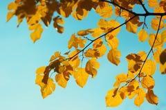 秋天叶子自然背景 免版税库存图片