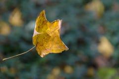 秋天叶子落 库存照片