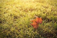 秋天叶子葡萄酒照片在领域的在日落 免版税库存照片