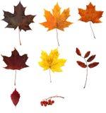 秋天叶子表单来回框架的干燥标本集 免版税库存图片