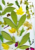 秋天叶子表单来回框架的干燥标本集 免版税图库摄影