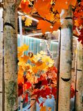 秋天叶子被启发的商店显示 免版税库存照片
