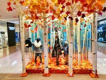 秋天叶子被启发的商店显示 免版税图库摄影