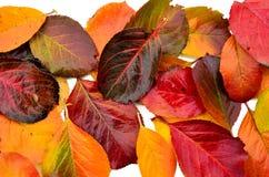 秋天叶子调色板 免版税图库摄影