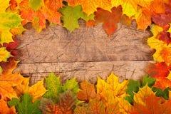 秋天叶子边界 免版税库存图片