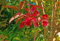 秋天叶子颜色在一个庭院里在阳光下 免版税图库摄影