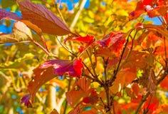 秋天叶子颜色在一个庭院里在阳光下 免版税库存图片