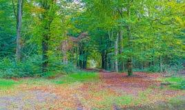 秋天叶子颜色在一个森林里在阳光下 免版税库存照片