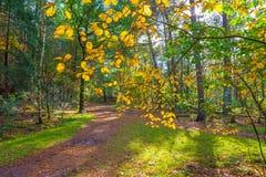 秋天叶子颜色在一个森林里在阳光下 免版税库存图片