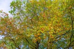 秋天叶子颜色在一个森林里在阳光下 库存图片