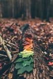 秋天叶子颜色梯度  库存图片