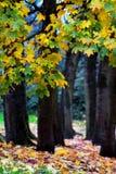 秋天叶子颜色 库存图片
