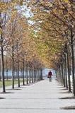 秋天叶子,在四大自由的秋天颜色停放,纽约 库存图片