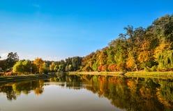 秋天叶子,槭树分支反对湖和天空 日绿色留下公园星期日晴朗 库存图片