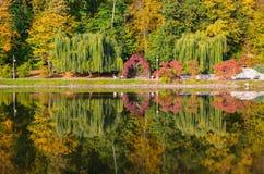 秋天叶子,槭树分支反对湖和天空 日绿色留下公园星期日晴朗 库存照片